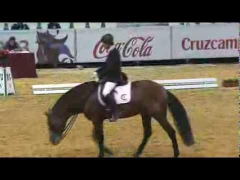 Venta de caballos Españoles - Caballos en venta Caballos PRE Videos Caballos Doma Clasica