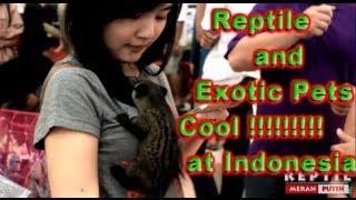 getlinkyoutube.com-[HD] Reptile Expo & Exotic Pets Invasion 2013 Jakarta Indonesia