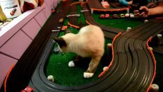 getlinkyoutube.com-Catzilla vs. Slot Car Track
