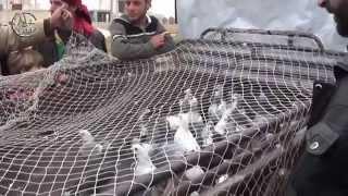 getlinkyoutube.com-خطوة || استمرار تربية الحمام و الاعتناء بها في سوريا رغم الحرب