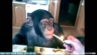 getlinkyoutube.com-Đọc suy nghĩ động vật Tổng Hợp  - Tin Việt MC Trung Tô phần ( 4 )
