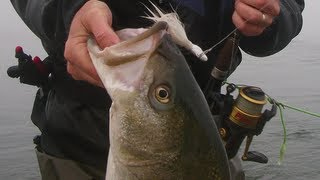 getlinkyoutube.com-How to Bucktail Striped Bass from Bay Shorelines - Part 1
