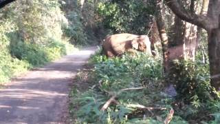 getlinkyoutube.com-Wild Elephant Encounter At Gavi