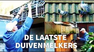 De Laatste Duivenmelkers/ The Last Pigeon Fanciers - Amsterdams Peil