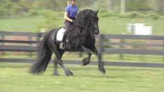 "getlinkyoutube.com-FRIESIAN STALLION ""Leave you Breathless"""