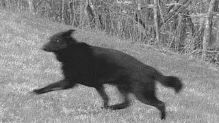 getlinkyoutube.com-Cão Fastasma salva a vida do dono