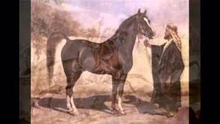 getlinkyoutube.com-فلم عن الخيل والحصان العربي الاصيل