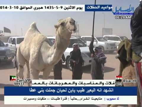 الفحل رمان للمالك سعود الربيعان العامري السبيعي