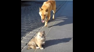 getlinkyoutube.com-한옥마을에서 본 갓태어난 강아지의 어미개 찾기, Jeonju Hanok Village. Jeonju city. , KOREA , 전주한옥마을
