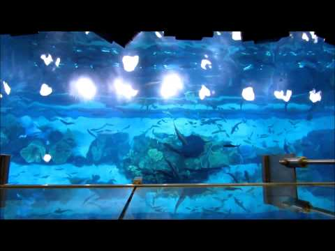 20130124 Dubai Mall aquarium and underwater ZOO 1080p