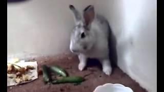 getlinkyoutube.com-الأرنب  الدي ادهش صاحبه