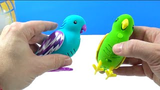 getlinkyoutube.com-Little Live Pets Tweet Talking Bird Review #4 Silly Billie and #5 Cool Cookie Single Pack Playset