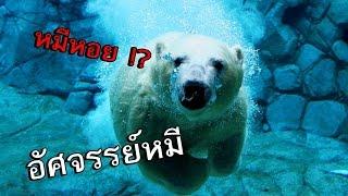 getlinkyoutube.com-Amazing World - เกมส์หมี เล่นแบบหมีๆ ตอนเดียวเลิก