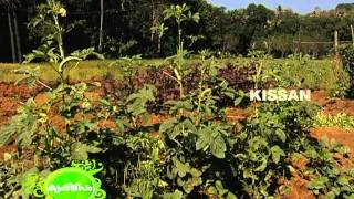 getlinkyoutube.com-Vegetable cultivation in 10 cents by a Magician