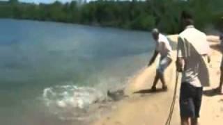 getlinkyoutube.com-Senão filma-se, era mais uma história de pescador...