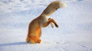 getlinkyoutube.com-점프가 실패 재미있는 동물 - 가장 재미있는 동물