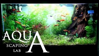 Aquascaping Lab - Tutorial Natural rich mix tank wood style (size 80 x 35 x 45h 120 L) Part 1