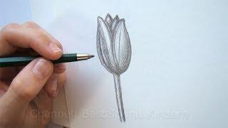 getlinkyoutube.com-Zeichnen lernen: Blume zeichnen - Tulpe - Blüte