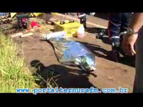 Acidente na Rodovia Victor Maida; Portal Ternura Fm