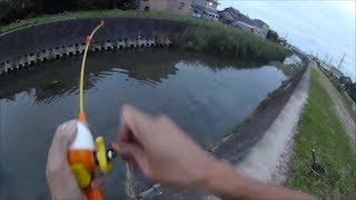 getlinkyoutube.com-ライギョ釣り 子供用釣り道具でゲットだぜ!ヒット前から収録!