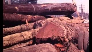 getlinkyoutube.com-Historical Timber Handling & Milling - Safety Nightmare!
