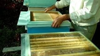 getlinkyoutube.com-объединение пчелиных семей на зиму