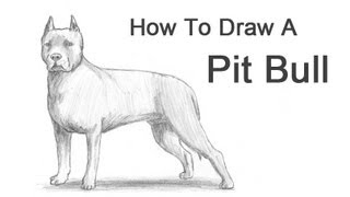 getlinkyoutube.com-How to Draw a Dog (Pit Bull)