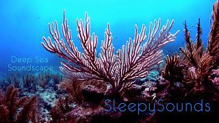 getlinkyoutube.com-Deep Sea Soundscape – 9 hours of underwater ambience – Deep Ocean Sleep Sounds