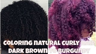 getlinkyoutube.com-Coloring Natural Curly Hair Dark brown to Burgundy (Trials & Errors)| JASMINLEE515