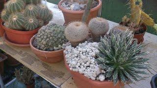 getlinkyoutube.com-My Cacti & Succulent plants end of September Update 2016