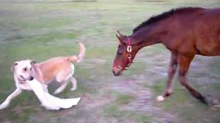 Amazing tug game between two unlikely friends