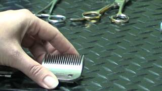 getlinkyoutube.com-Pet Grooming Hand Tools for the Do-It-Yourself Dog Groomer