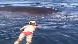 getlinkyoutube.com-Кит благодарит спасших его рыбаков