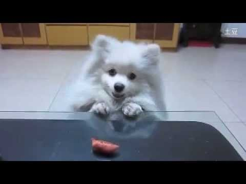 Dog waits patiently for treat