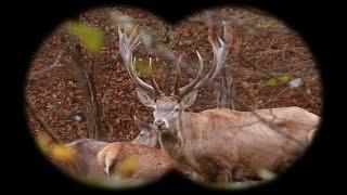 getlinkyoutube.com-Red deer hunting in Slovakia - SHOOTINGPRESS