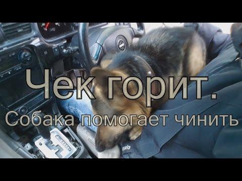 Горит чек на субару! Прошу собаку принести сканер.