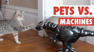 getlinkyoutube.com-Pets vs Machines