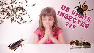 getlinkyoutube.com-[JOUET] On dirait de vrais insectes ! Ou presque... - Studio Bubble Tea unboxing Hexabug stuff