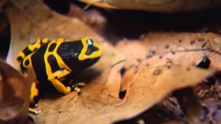 Wild SideTV-Raising Dart Frogs