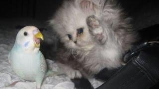 getlinkyoutube.com-Videos De Risa De Loros Molestando A Perros Y Gatos, Morirás De Risa