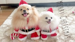 getlinkyoutube.com-Puppy Santa is Coming to town