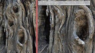 getlinkyoutube.com-20) Beginners Guide to Bonsai Deadwood - Bonsai Technique Series