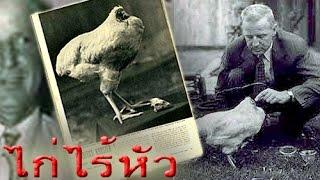 getlinkyoutube.com-ไมค์ ไก่หัวขาดแต่ไม่ตาย | เรื่องแปลกแต่จริงของไก่ไร้หัว ตำนาน ไก่มหัศจรรย์ชื่อดังของอเมริกา
