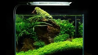 getlinkyoutube.com-Red Rock Nano Aquascape by James Findley