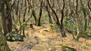 getlinkyoutube.com-제주도 한라산 붉은오름과 사려니숲길