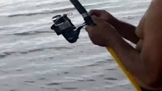 getlinkyoutube.com-ตกปลาใหญ่มาก  ที่แม่น้ำปิง