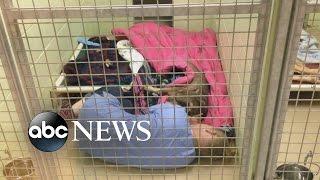 Animal Shelter Staffer Cuddles With Abandoned Dog