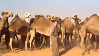 getlinkyoutube.com-منقية علوش بن ناصر العلوش ( الطايلات )