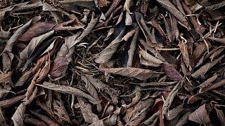 getlinkyoutube.com-CREEPYPASTA | Mr. Leaves