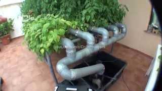 getlinkyoutube.com-Cultivo Hidroponico casero 2.4